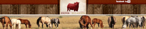Pieper Red Angus and Quarterhorses
