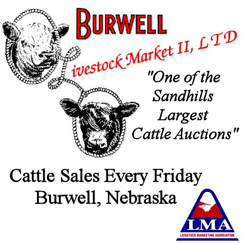 One of the Sandhill's largest cattle auctions featuring choice and fancy stocker and feeder cattle. Cattle sales every Friday in Burwell, Nebraska.