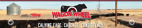 This is the Wagon Wheel Ranch in Yuma, CO.  We have our annual bull sale in March.  We always have it at the ranch -> 3 1/2 miles south of Yuma on Highway 59.  We have been in business since 1950 raising registered black Angus cattle.