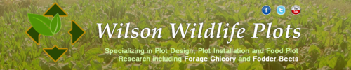 Wilson Wildlife Plots in Scottsbluff NE. using chicory and fodder beets for turkey, sheep, cattle and other livestock grazing and offers plot research, design