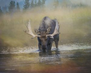 Moose and Mist